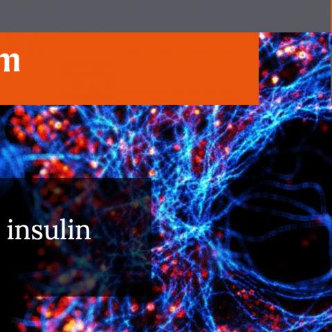 Nature Metabolism Banner